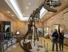 В Международный день музеев 18 мая музеи Казанского Кремля можно посетить бесплатно
